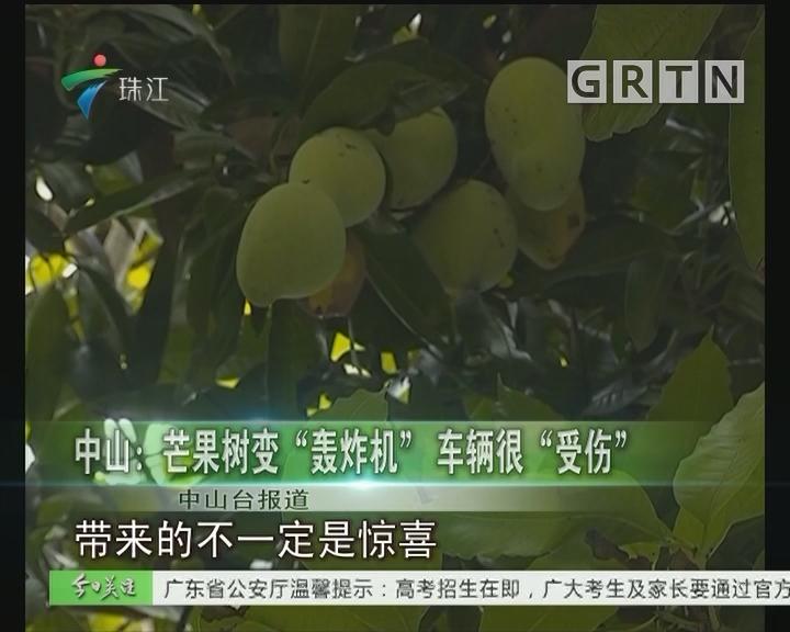 """中山:芒果树变""""轰炸机""""车辆很""""受伤"""""""