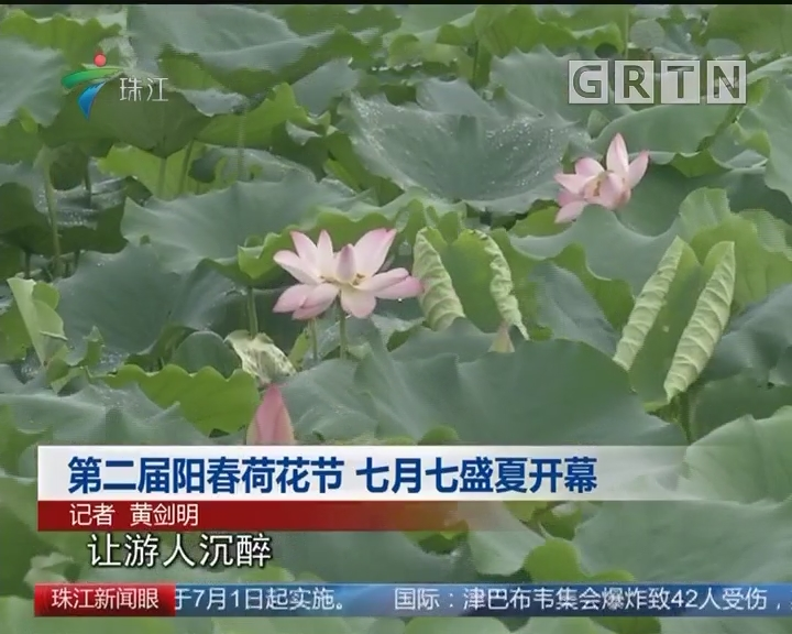 第二届阳春荷花节 七月七盛夏开幕
