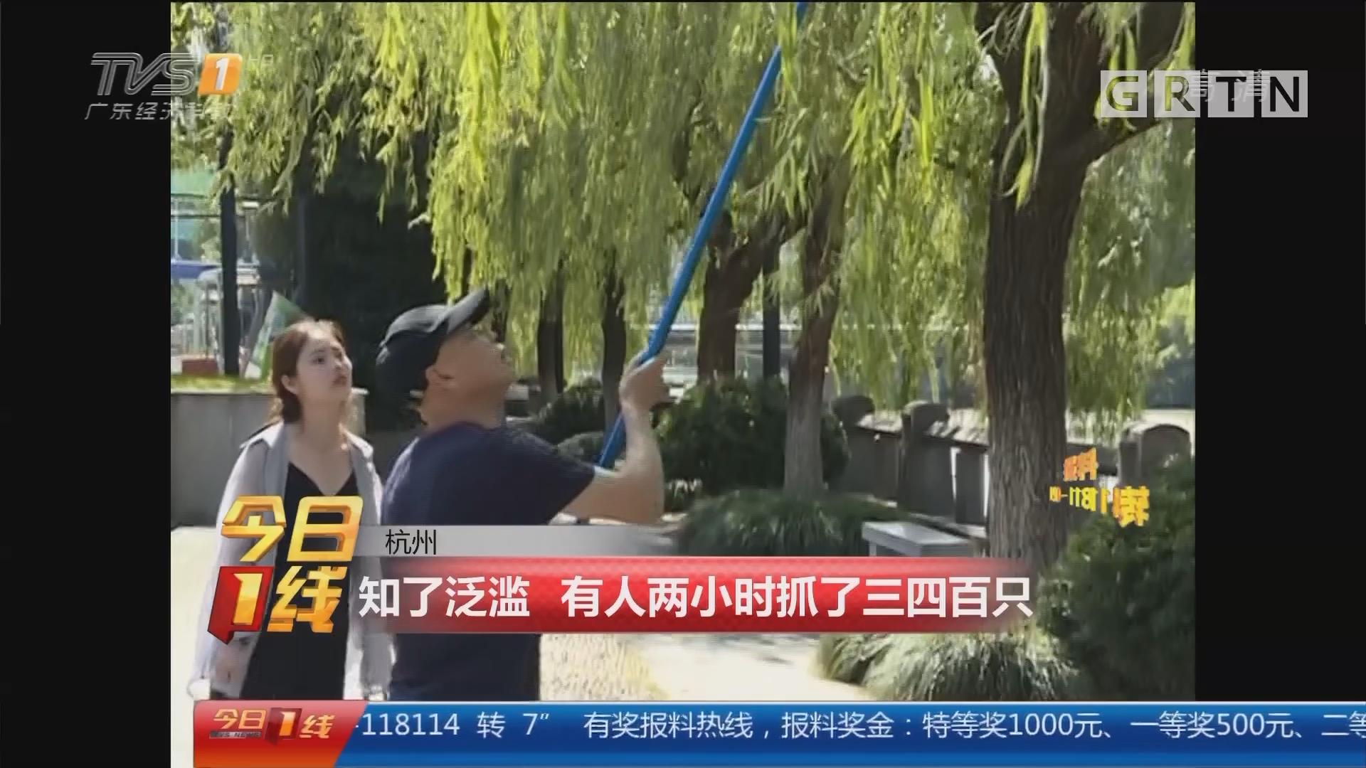 杭州:知了泛滥 有人两小时抓了三四百只