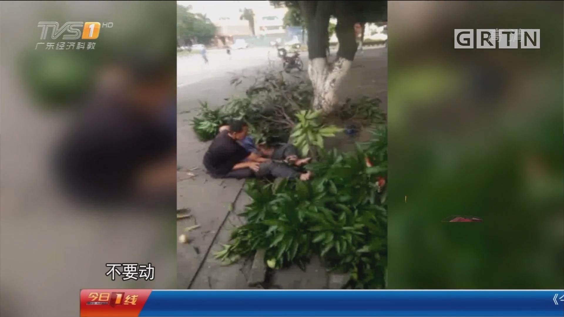 佛山顺德:男子爬树摘绿化芒 高空摔下折了脚