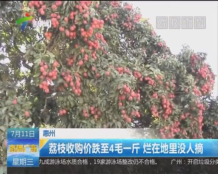 惠州:荔枝收购价跌至4毛一斤 烂在地里没人摘