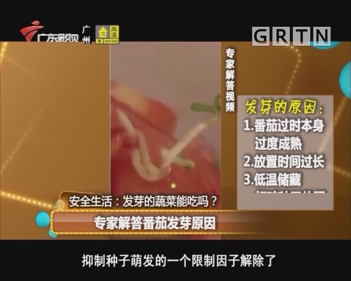 发芽的蔬菜能吃吗?番茄上的黑斑是幼果期受到损伤