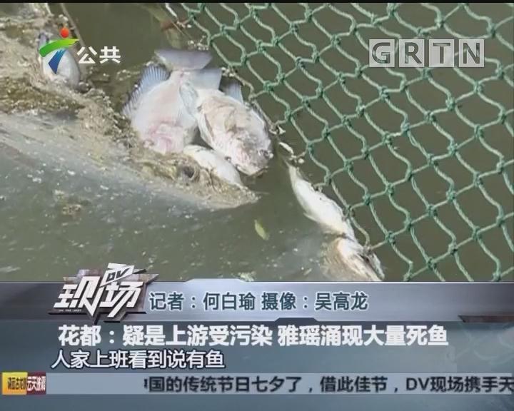 花都:疑是上游受污染 雅瑶涌现大量死鱼