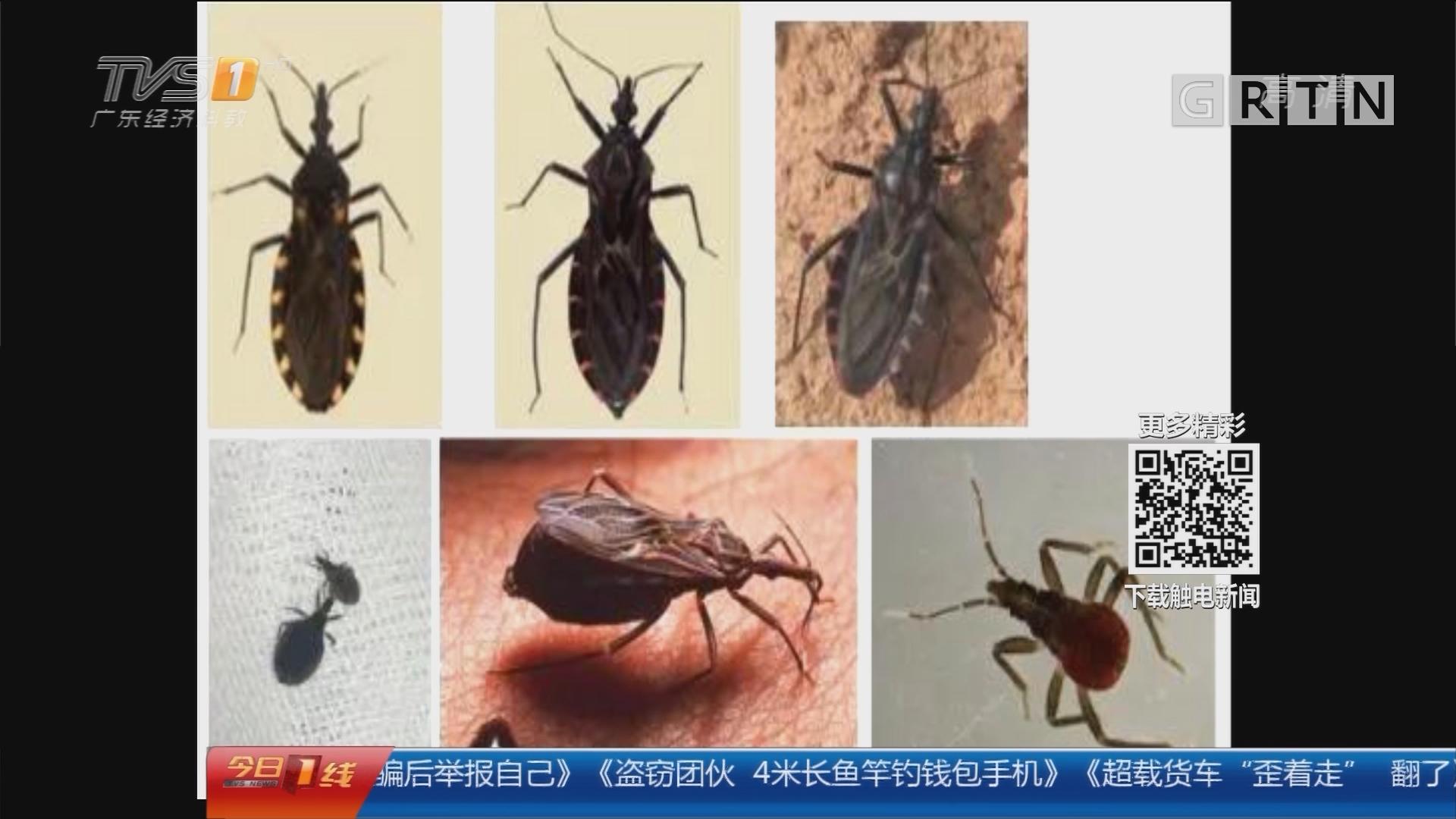 广州:悬赏捉虫令发布后 疾控中心电话被打爆
