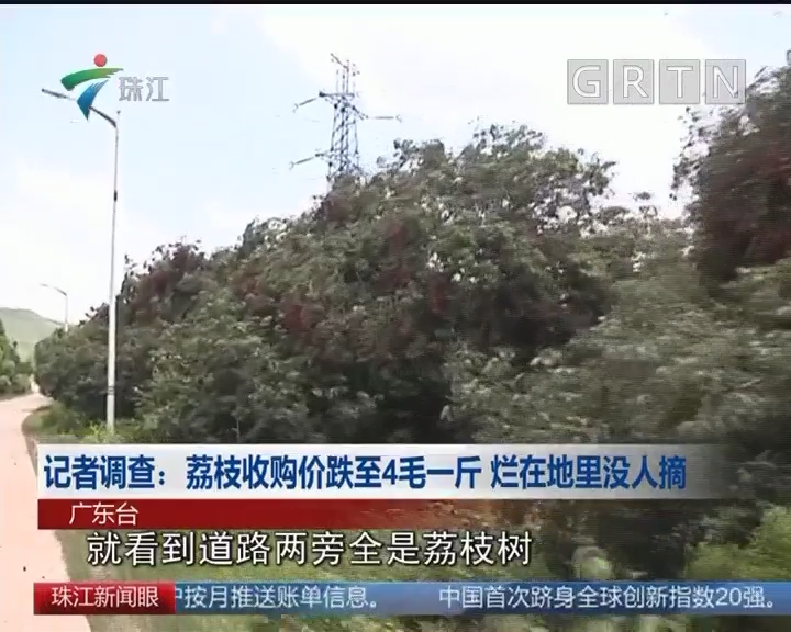 记者调查:荔枝收购价跌至4毛一斤 烂在地里没人摘