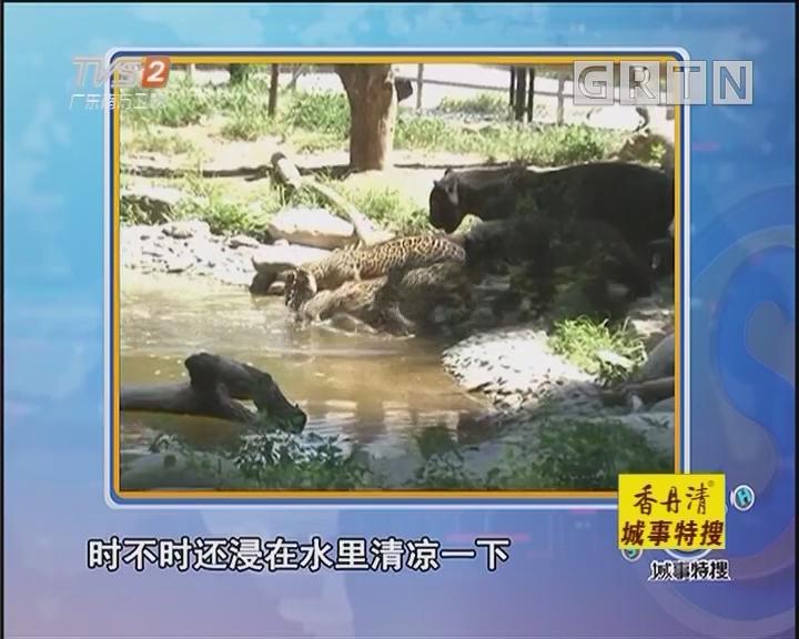 动物园里动物消暑有良方