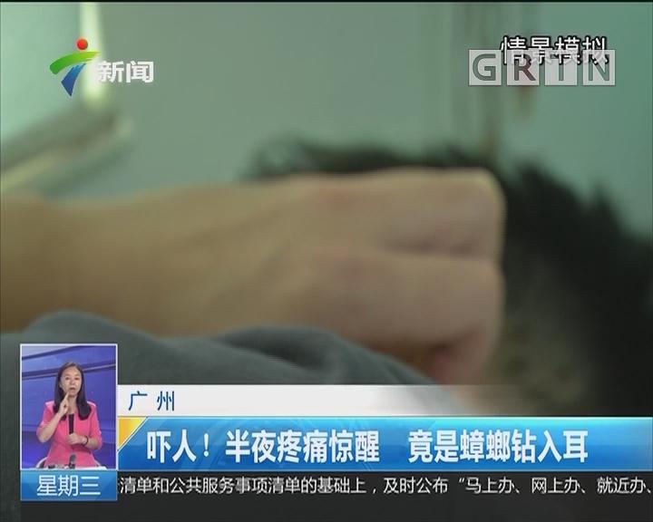 广州:吓人!半夜疼痛惊醒 竟是蟑螂钻入耳