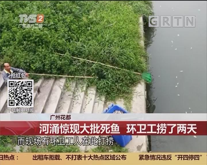 广州花都:河涌惊现大批死鱼 环卫工捞了两天