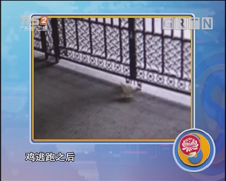 幼儿园的鸡被谁抓走了?