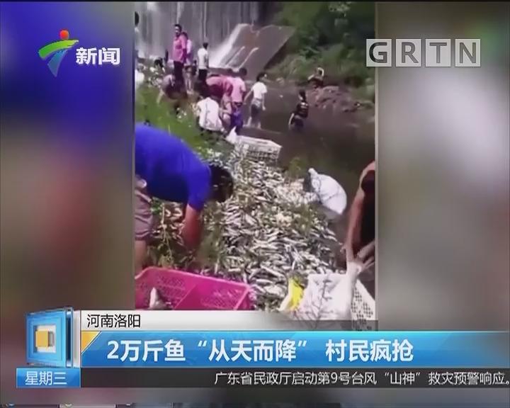 """河南洛阳:2万斤鱼""""从天而降"""" 村民疯抢"""