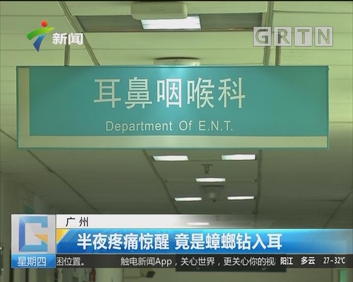 广州:半夜疼痛惊醒 竟是蟑螂钻入耳