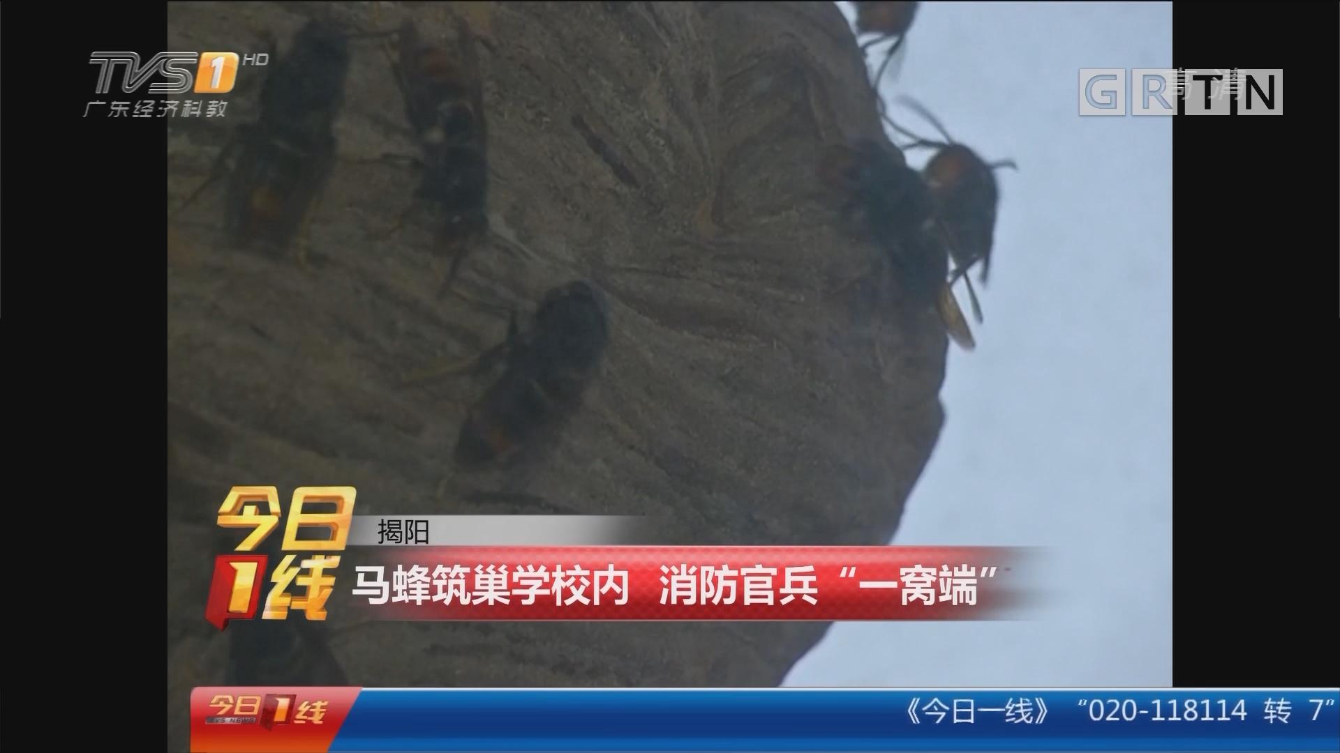 """揭阳:马蜂筑巢学校内 消防官兵""""一窝端"""""""