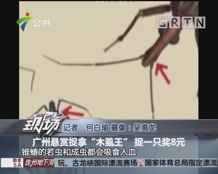 """广州悬赏捉拿""""木虱王"""" 捉一只奖8元"""