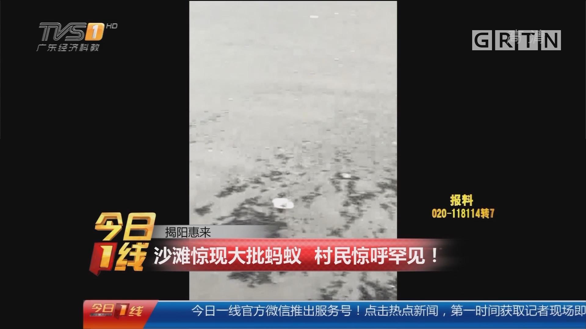 揭阳惠来:沙滩惊现大批蚂蚁 村民惊呼罕见!