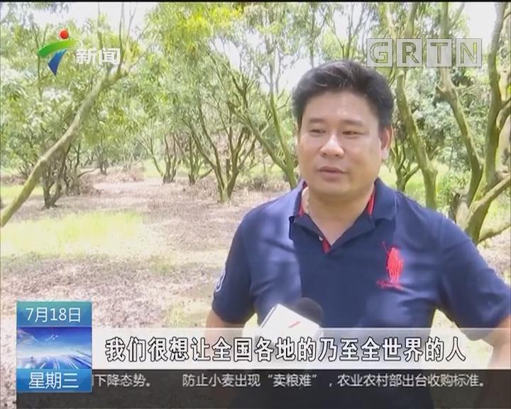 """惠州:荔枝丰产难销 """"强哥""""帮果农卖掉20万斤荔枝"""