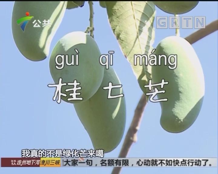 桂七芒:谁香谁好吃 试过才知道!