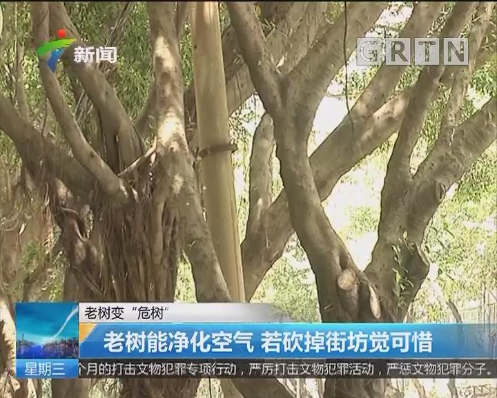 """老树变""""危树"""":老树能净化空气 若砍掉街坊觉可惜"""