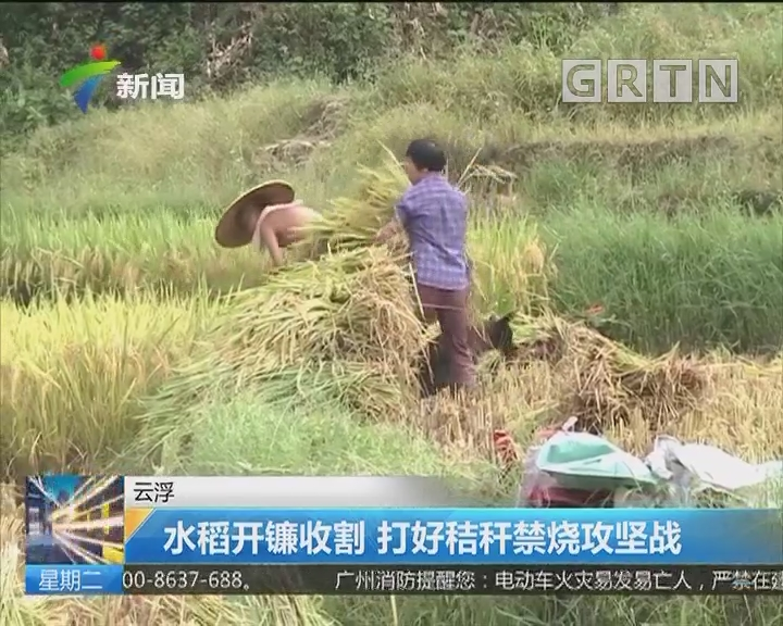 云浮:水稻开镰收割 打好秸秆禁烧攻坚战