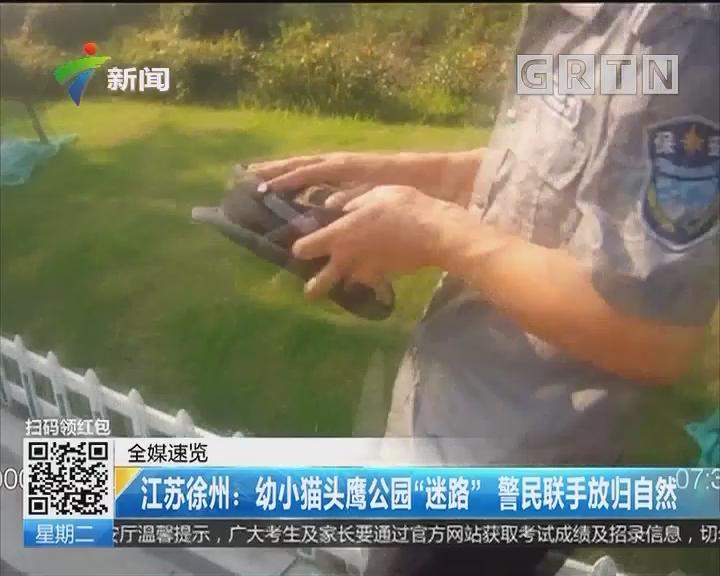 """江苏徐州:幼小猫头鹰公园""""迷路"""" 警民联手放归自然"""
