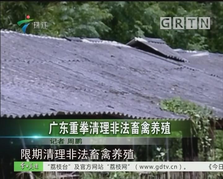 广东重拳清理非法畜禽养殖