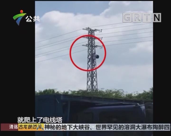 佛山:中午突然停电 因有人私爬电线塔