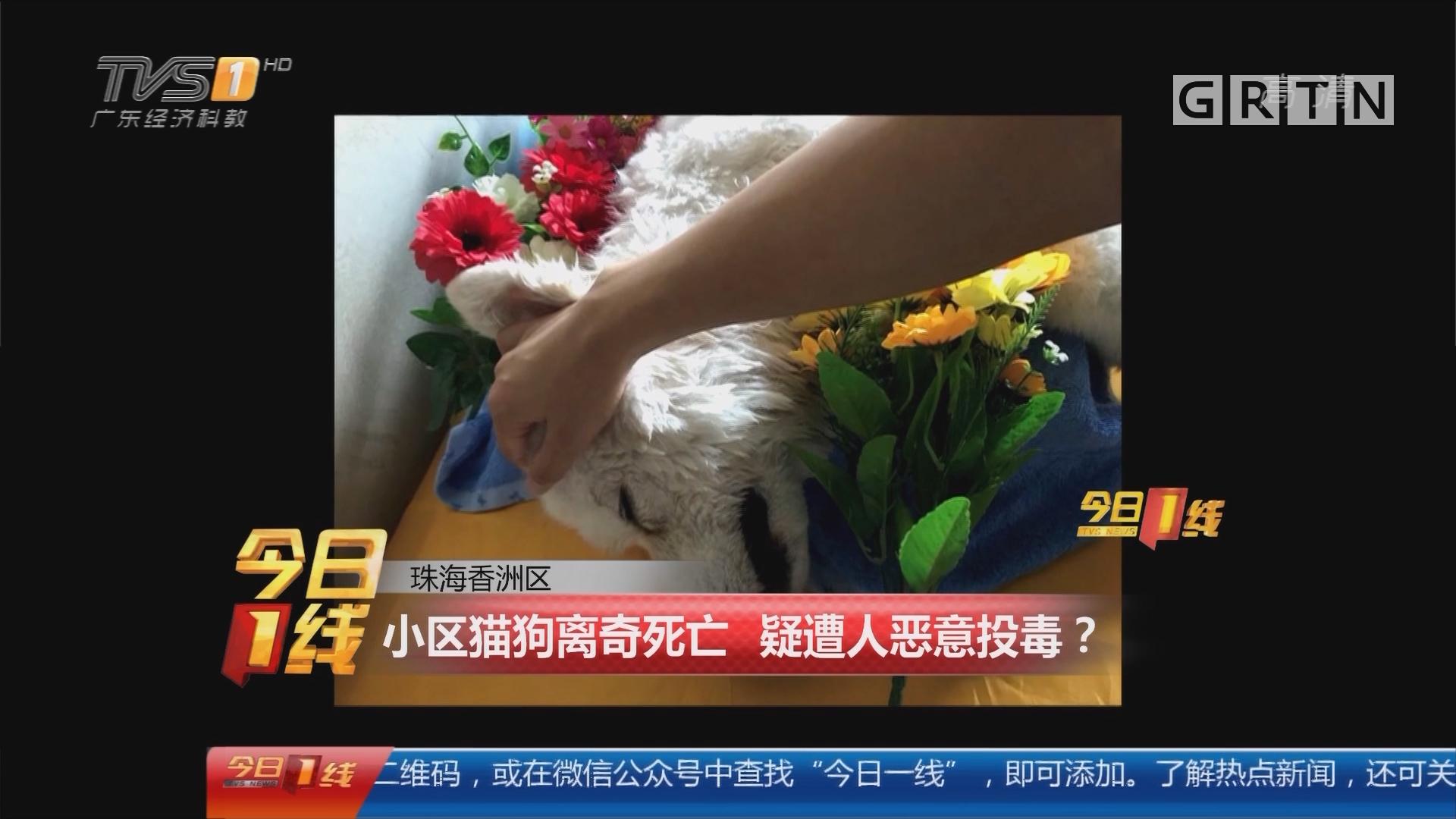 珠海香洲区:小区猫狗离奇死亡 疑遭人恶意投毒?