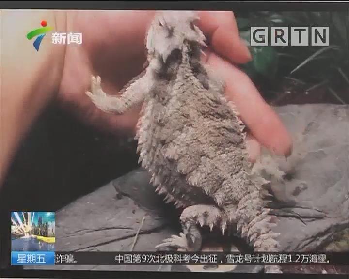 """危险的""""宠物""""陕西:女孩网购毒蛇被咬身亡"""
