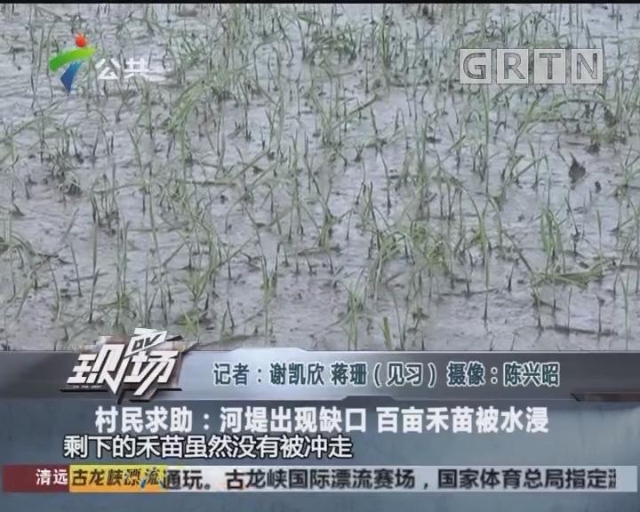 村民求助:河堤出现缺口 百亩禾苗被水浸