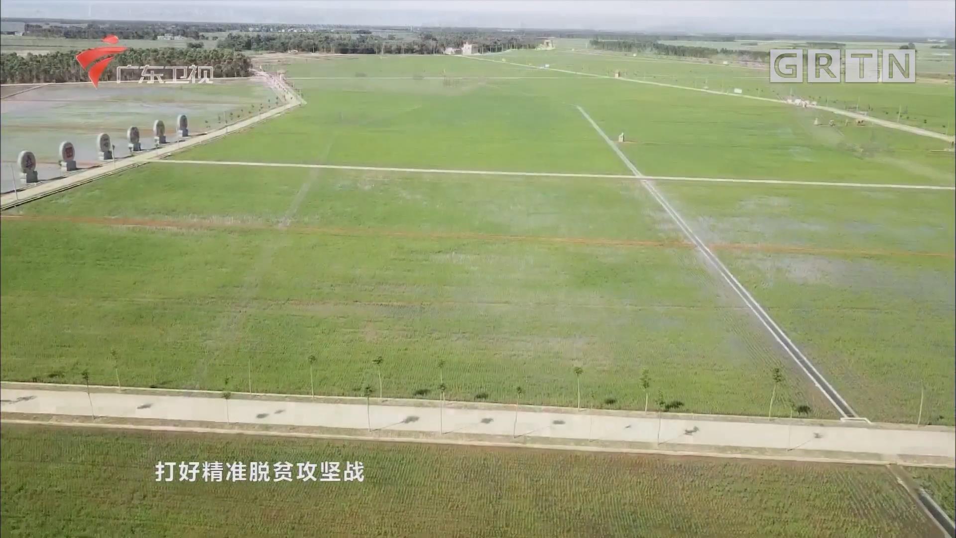 湛江雷州:旱改水 农田披新衣