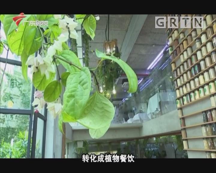 藏在高楼林立中的植物餐厅