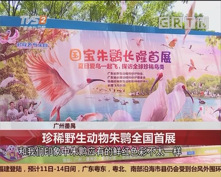 广州番禺:珍稀野生动物朱鹮全国首展