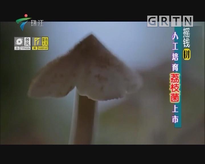 [2018-07-23]摇钱树:人工培育荔枝菌上市