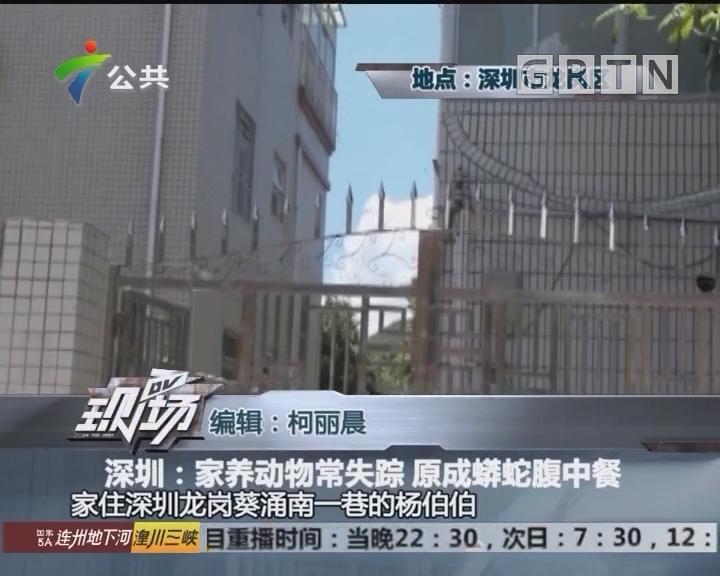深圳:家养动物常失踪 原成蟒蛇腹中餐