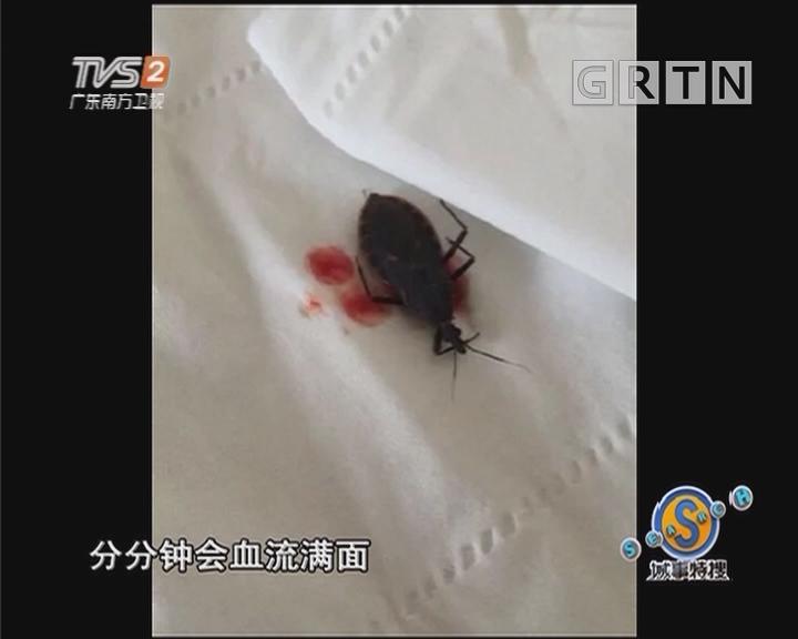 """全城悬赏抓虫 """"木虱王""""一只8元(二)"""