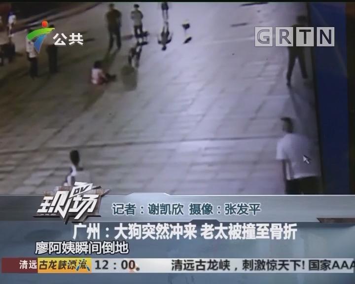 广州:大狗突然冲来 老太被撞至骨折