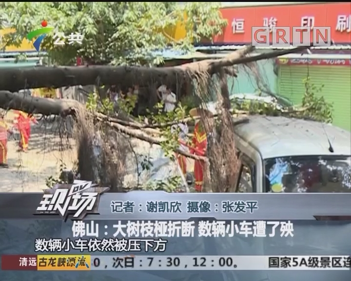 佛山:大树枝桠折断 数辆小车遭了殃