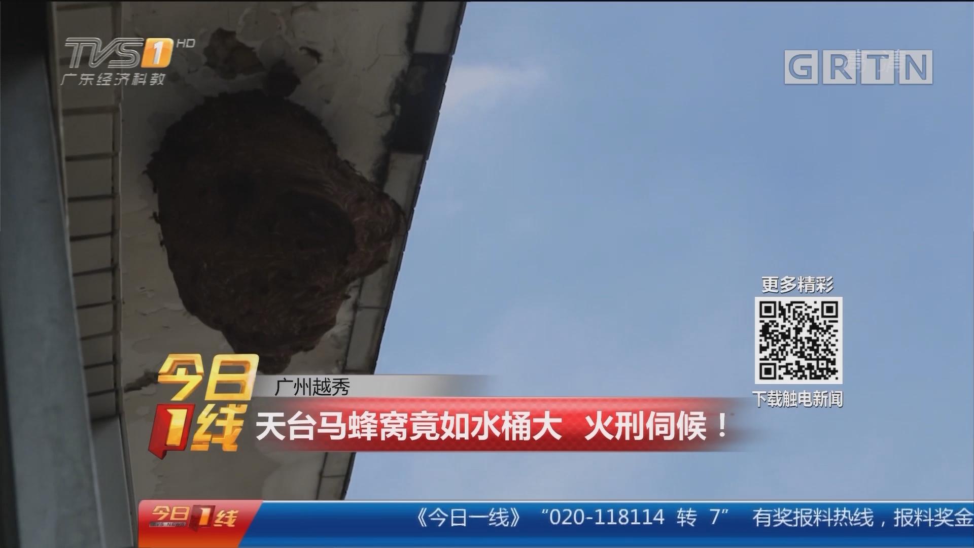 广州越秀:天台马蜂窝竟如水桶大 火刑伺候!