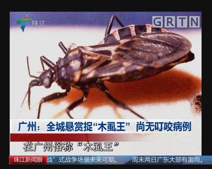 """广州:全城悬赏捉""""木虱王"""" 尚无叮咬病例"""