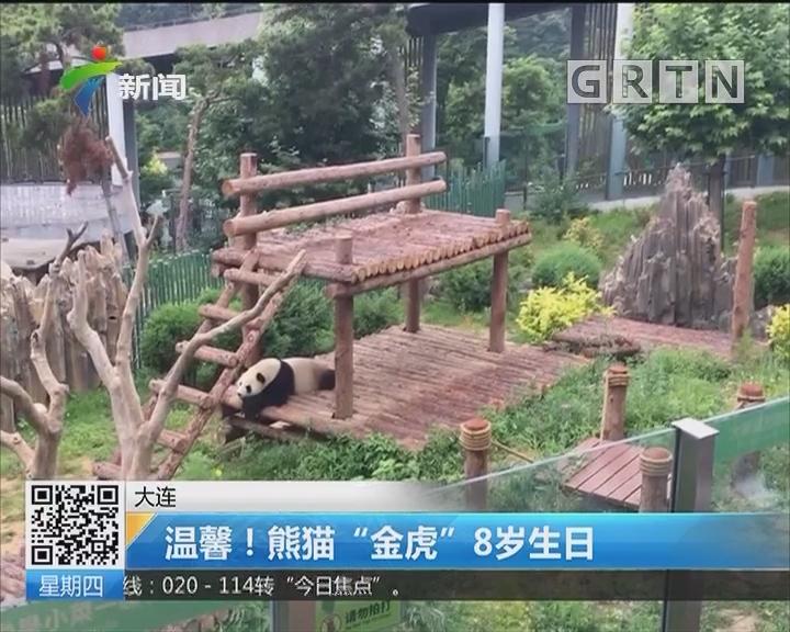 """大连:温馨!熊猫""""金虎""""8岁生日"""