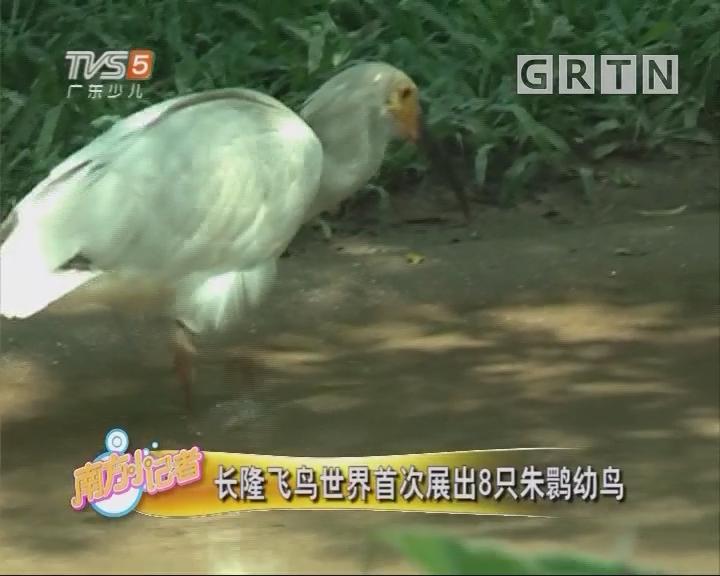 [2018-07-16]南方小记者:长隆飞鸟世界首次展出8只朱鹮幼鸟