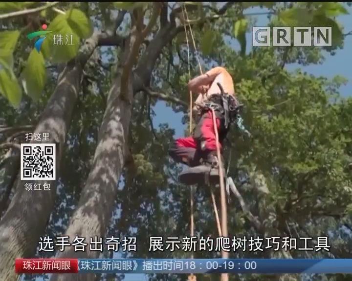 欧洲爬树锦标赛 比比谁更快