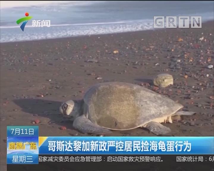 哥斯达黎加新政严控居民捡海龟蛋行为