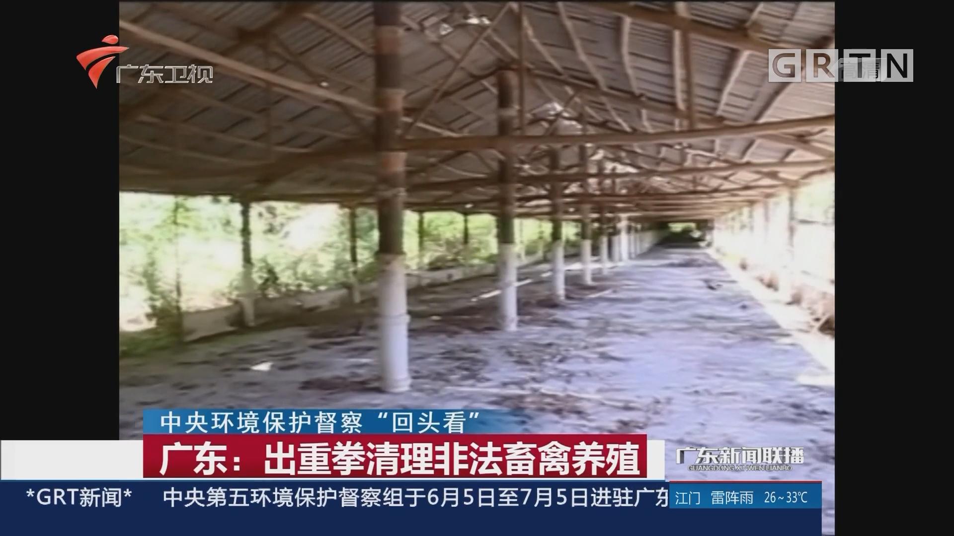 广东:出重拳清理非法畜禽养殖
