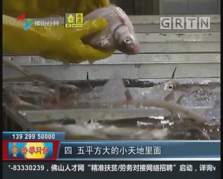 """佛山:开渔季:本地河鲜不愁卖 街坊尝开渔 """"头啖汤"""""""