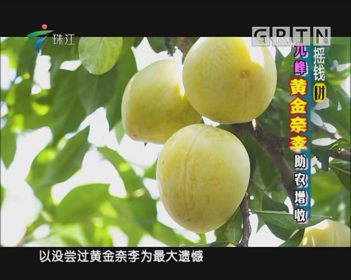 [2018-08-06]摇钱树:九峰黄金亲李助农增收