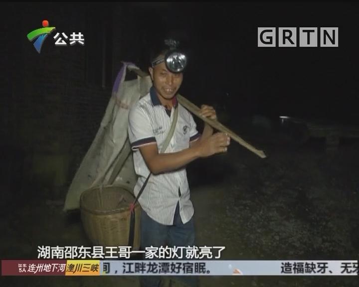 """避免昨日""""黄花"""" 菜农争做夜半采花人"""