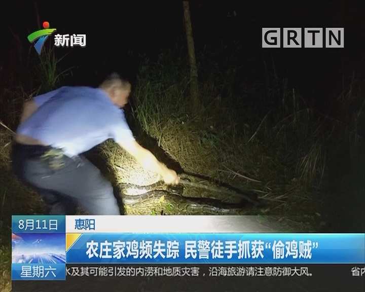 """惠阳:农庄家鸡频失踪 民警徒手抓获""""偷鸡贼"""""""