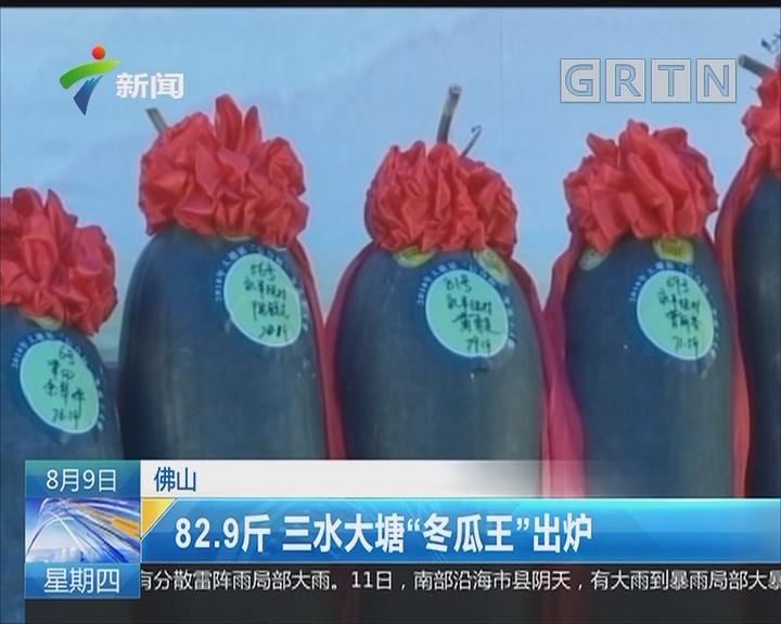 """佛山:82.9斤 三水大塘""""冬瓜王""""出炉"""