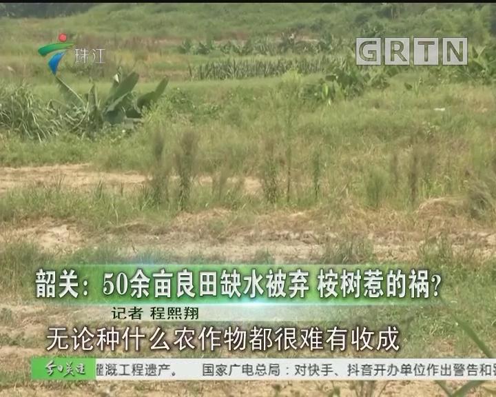 韶关:50余亩良田缺水被弃 桉树惹的祸?