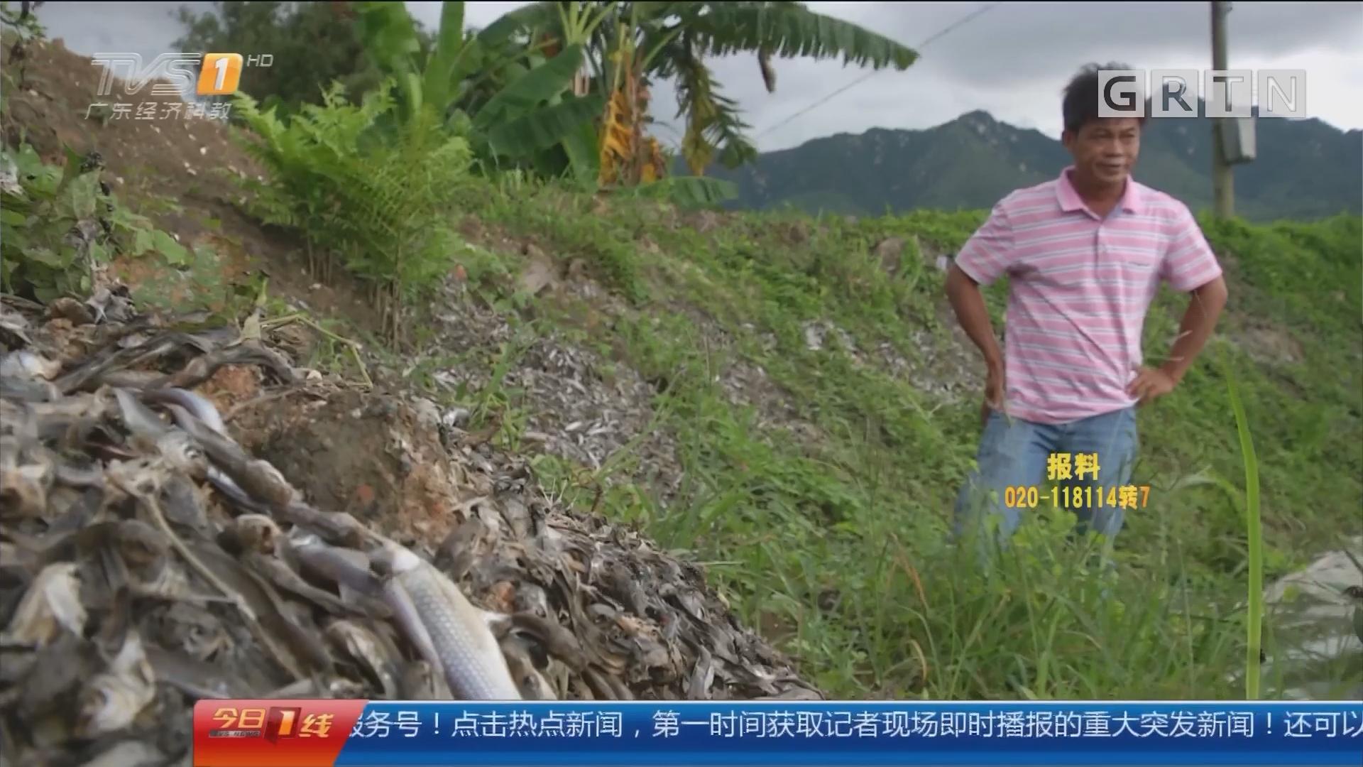 清远清新区:三十亩塘鱼一日暴毙 塘主损失惨重